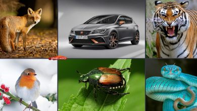 Photo of سيارات بأسماء الحيوانات (مع الصور)