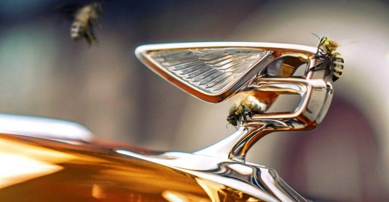 Photo of بنتلي تُنتج العسل!